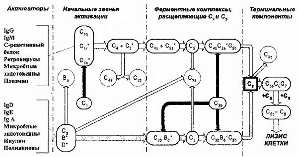 Рис.75.  Схема активации системы комплемента.  Звездочками помечены факторы, обладающие ферментативной активностью...